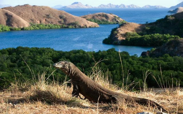 "Tour operators rail against Indonesia's ""Jurassic Park ..."